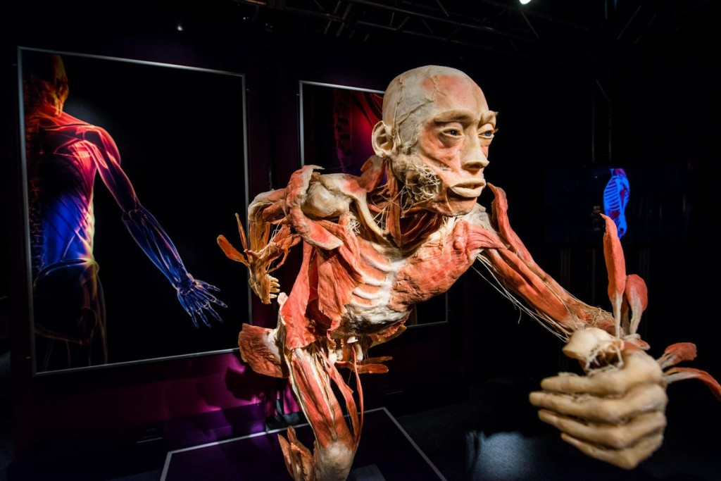 the_human_body_exhibition